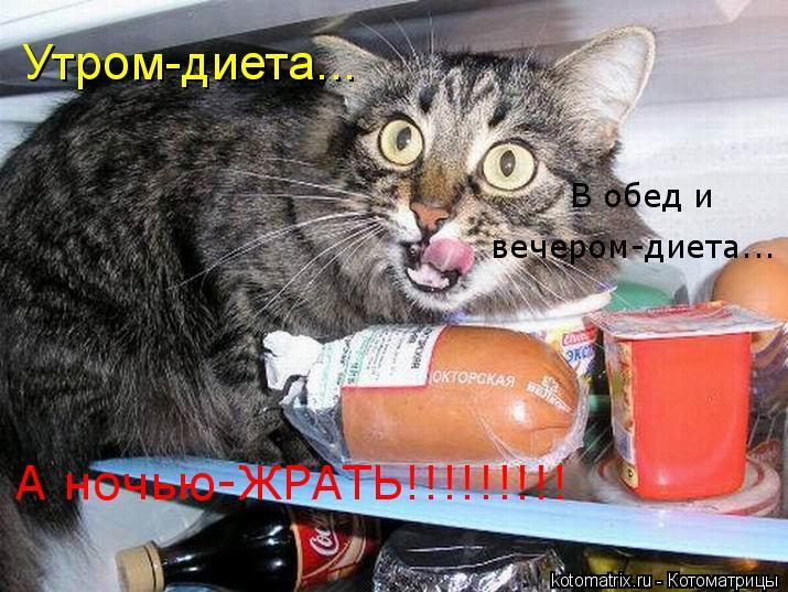 Котоматрица: Утром-диета... В обед и вечером-диета... вечером-диета... В обед и А ночью-ЖРАТЬ!!!!!!!!!