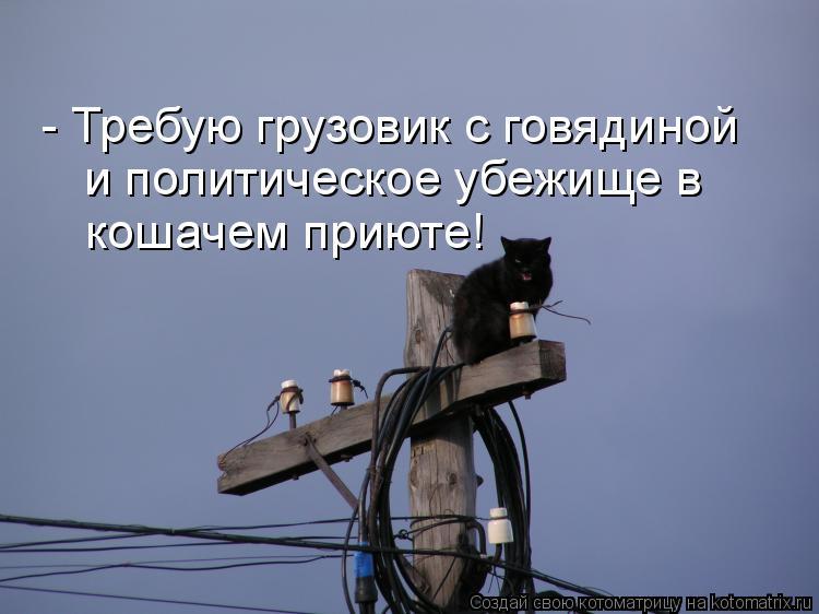 Котоматрица: - Требую грузовик с говядиной и политическое убежище в кошачем приюте!