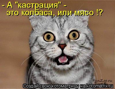 "Котоматрица: - А ""кастрация"" - это колбаса, или мясо !?"