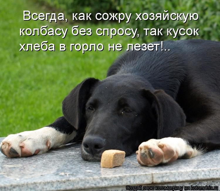 Котоматрица: Всегда, как сожру хозяйскую  колбасу без спросу, так кусок хлеба в горло не лезет!..