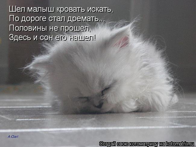 Котоматрица: Шел малыш кровать искать, По дороге стал дремать... Половины не прошел, Здесь и сон его нашел!