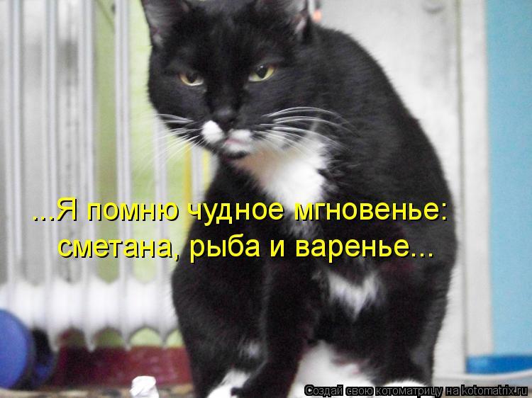 Котоматрица: ...Я помню чудное мгновенье: сметана, рыба и варенье...