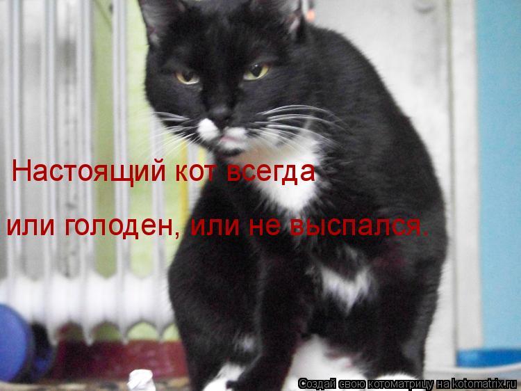 Котоматрица: Настоящий кот всегда  или голоден, или не выспался.