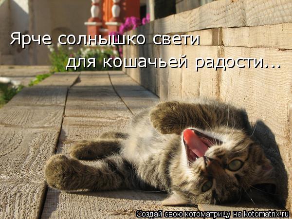 Котоматрица: Ярче солнышко свети для кошачьей радости...