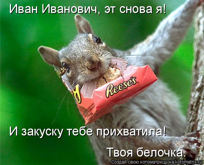 Котоматрица: Иван Иванович, эт снова я! И закуску тебе прихватила! Твоя белочка.