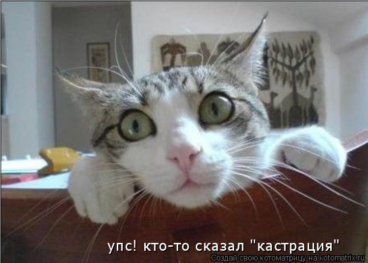 """Котоматрица: упс! кто-то сказал """"кастрация"""""""