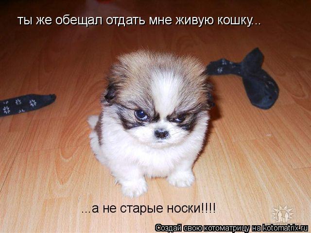 Котоматрица: ты же обещал отдать мне живую кошку... ...а не старые носки!!!!