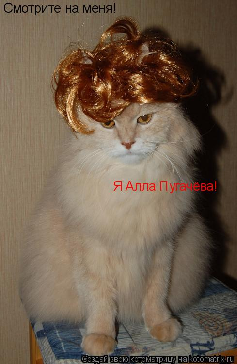 Котоматрица: Смотрите на меня! Я Алла Пугачёва!