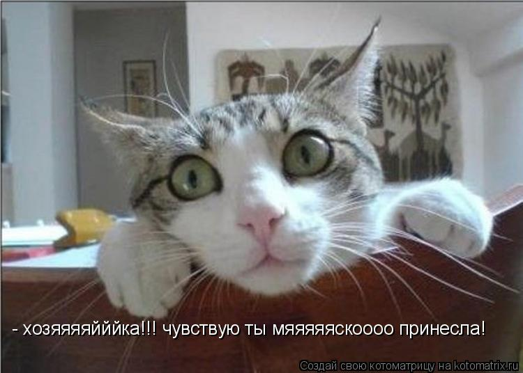Котоматрица: - хозяяяяйййка!!! чувствую ты мяяяяяскоооо принесла!