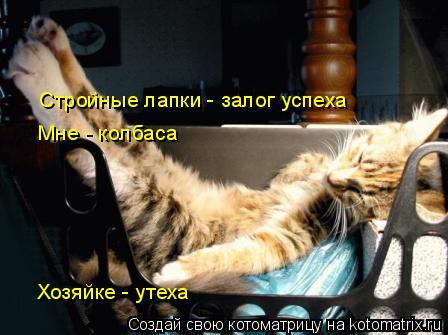 Котоматрица: Стройные лапки - залог успеха  Мне - колбаса  Хозяйке - утеха