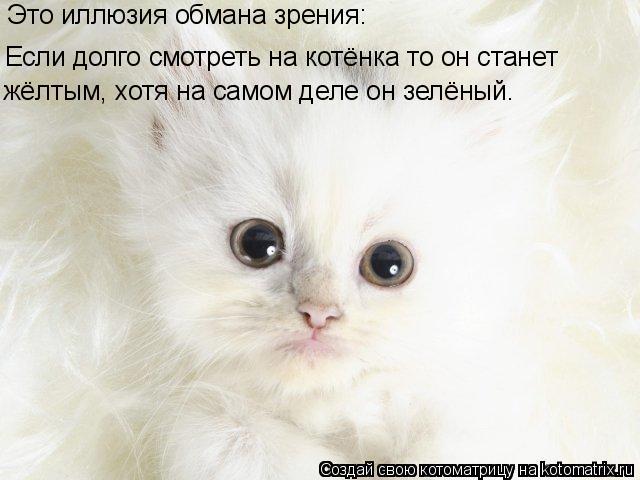 смотреть про котенка: