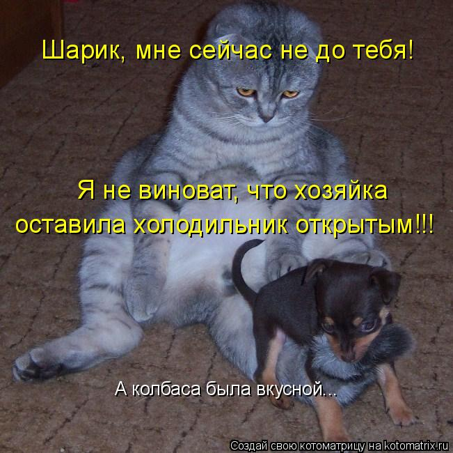 Котоматрица: Шарик, мне сейчас не до тебя! Я не виноват, что хозяйка оставила холодильник открытым!!! А колбаса была вкусной...
