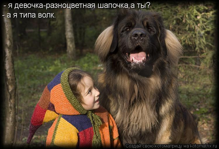 Котоматрица: - я девочка-разноцветная шапочка,а ты? - а я типа волк.