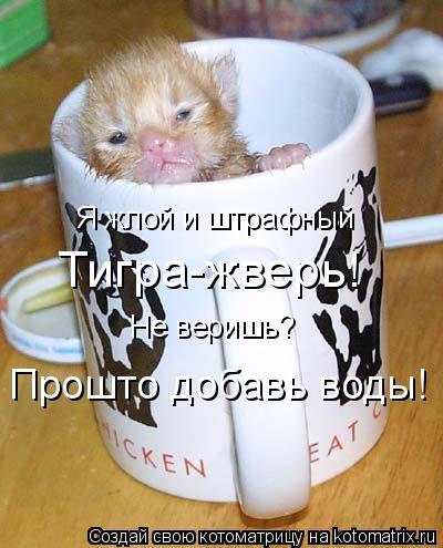 Котоматрица: Я жлой и штрафный Тигра-жверь! Не веришь? Прошто добавь воды!