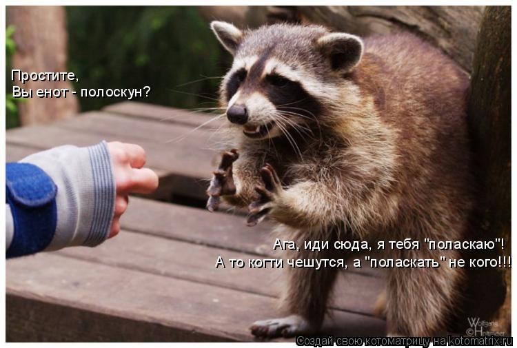 """Котоматрица: Простите,  Вы енот - полоскун? Ага, иди сюда, я тебя """"поласкаю""""! А то когти чешутся, а """"поласкать"""" не кого!!!"""