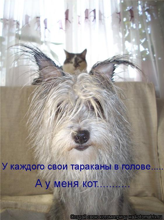Котоматрица: У каждого свои тараканы в голове...... А у меня кот...........