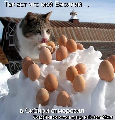 Котоматрица: Так вот что мой Василий ... в Сибири отморозил.