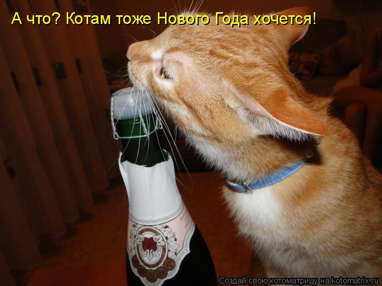 Котоматрица: А что? Котам тоже Нового Года хочется!