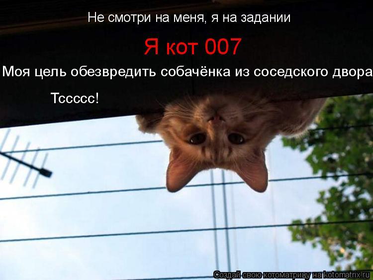 Котоматрица: Не смотри на меня, я на задании Я кот 007  Моя цель обезвредить собачёнка из соседского двора! Тссссс!