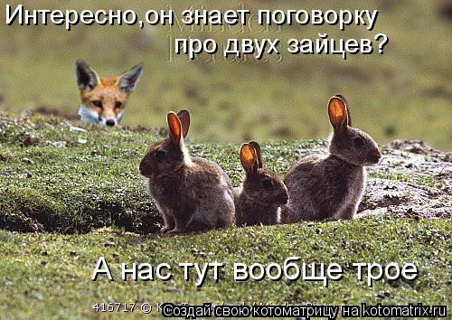 Котоматрица: Интересно,он знает поговорку про двух зайцев? А нас тут вообще трое