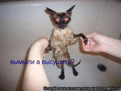 Котоматрица: вымыли а высушить?