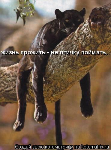 Котоматрица: жизнь прожить - не птичку поймать... жизнь прожить - не птичку поймать...