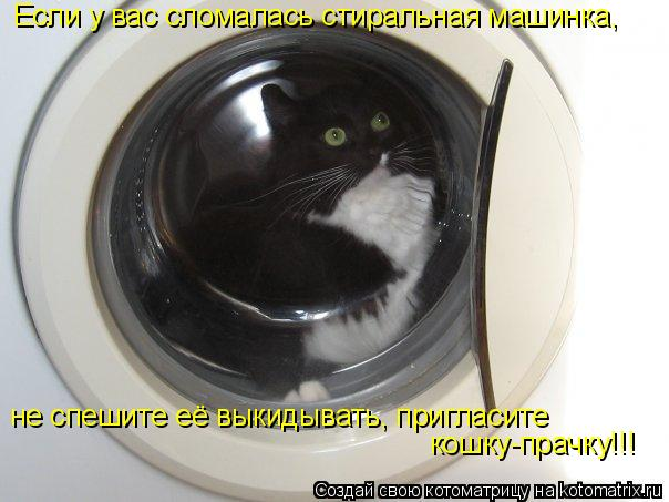 Котоматрица: Если у вас сломалась стиральная машинка, не спешите её выкидывать, пригласите кошку-прачку!!!