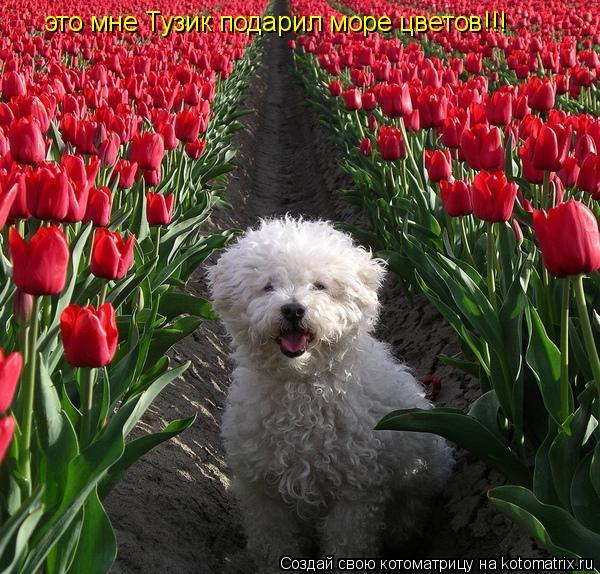 Котоматрица: это мне Тузик подарил море цветов!!!