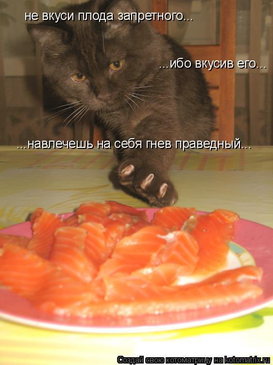 Котоматрица: не вкуси плода запретного... ...ибо вкусив его... ...навлечешь на себя гнев праведный...