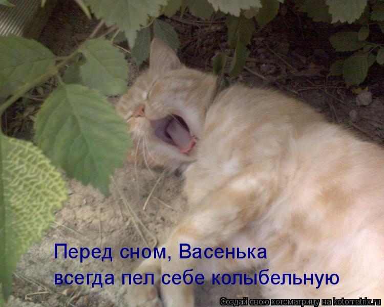 Котоматрица: Перед сном, Васенька всегда пел себе колыбельную