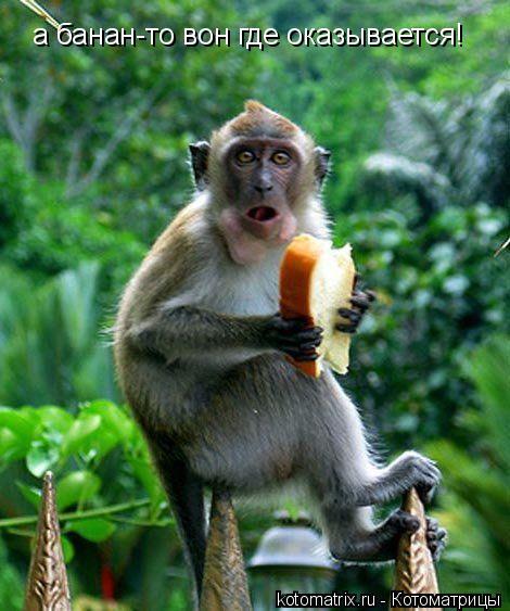 Котоматрица: а банан-то вон где оказывается!