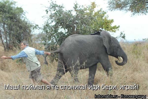 Котоматрица: Маш! поймал я те слоника! иди бери, играй!