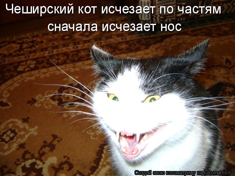 Котоматрица: Чеширский кот исчезает по частям сначала исчезает нос