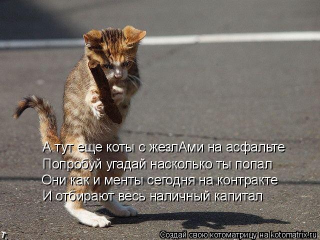Котоматрица: А тут еще коты с жезлАми на асфальте Попробуй угадай насколько ты попал Они как и менты сегодня на контракте И отбирают весь наличный капит