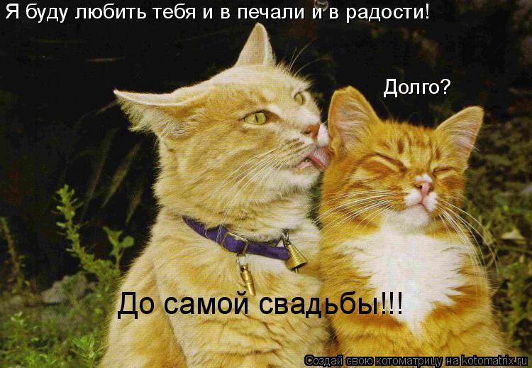 Котоматрица: Я буду любить тебя и в печали и в радости! Долго? До самой свадьбы!!!