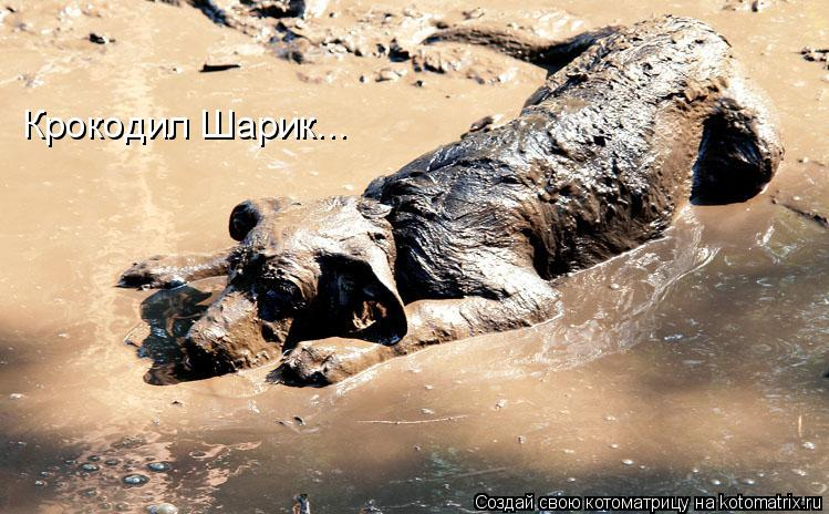 Котоматрица: Крокодил Шарик...