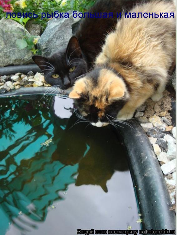 Котоматрица: ловись рыбка большая и маленькая