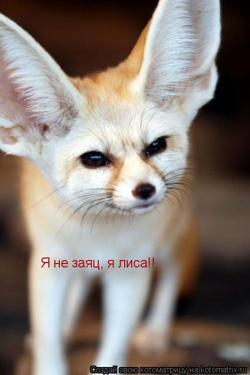 Котоматрица: Я не заяц, я лиса!!