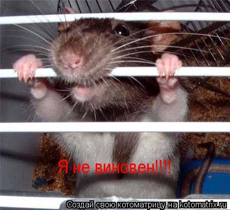 Котоматрица: Я не виновен!!!!