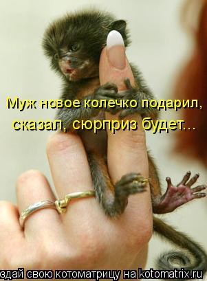 Котоматрица: Муж новое колечко подарил, сказал, сюрприз будет...