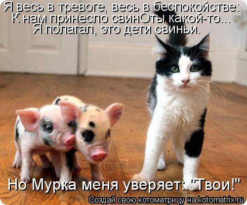"""Котоматрица: Я весь в тревоге, весь в беспокойстве: К нам принесло свинОты какой-то... Я полагал, это дети свиньи. Но Мурка меня уверяет: """"Твои!"""""""