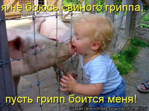 Котоматрица: я не боюсь свиного гриппа,  пусть грипп боится меня!