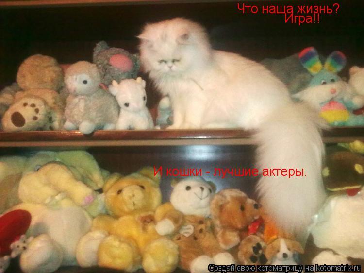 Котоматрица: Что наша жизнь? Игра!! И кошки - лучшие актеры.