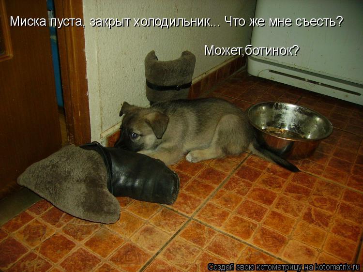 Котоматрица: Может,ботинок?  Миска пуста, закрыт холодильник... Что же мне съесть?