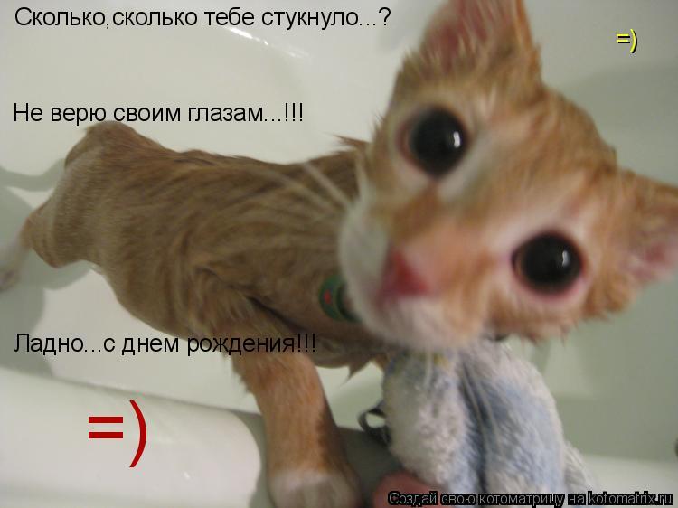 Котоматрица: Сколько,сколько тебе стукнуло...? Не верю своим глазам...!!! Ладно...с днем рождения!!! =) =)