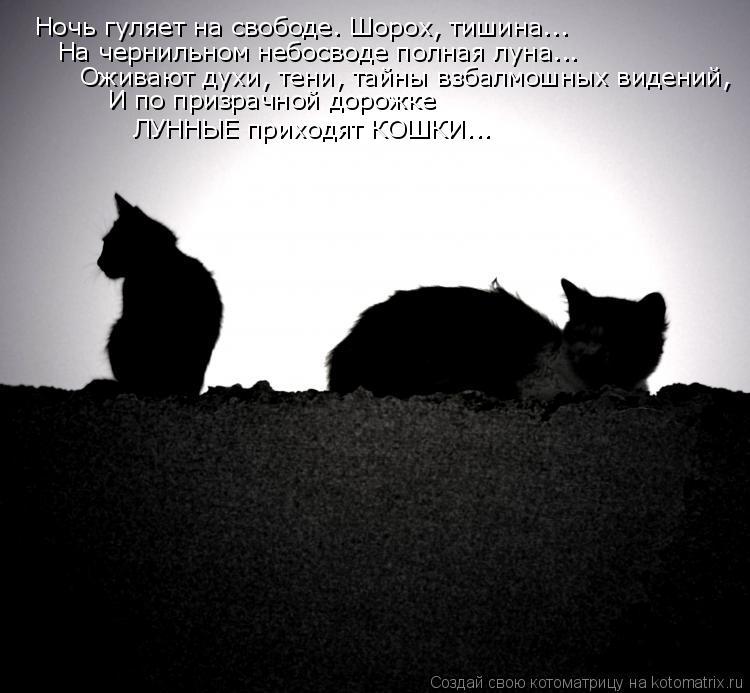 Котоматрица: Ночь гуляет на свободе. Шорох, тишина... На чернильном небосводе полная луна... Оживают духи, тени, тайны взбалмошных видений, И по призрачной