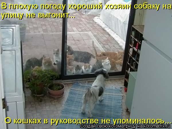 Котоматрица: В плохую погоду хороший хозяин собаку на улицу не выгонит... О кошках в руководстве не упоминалось...