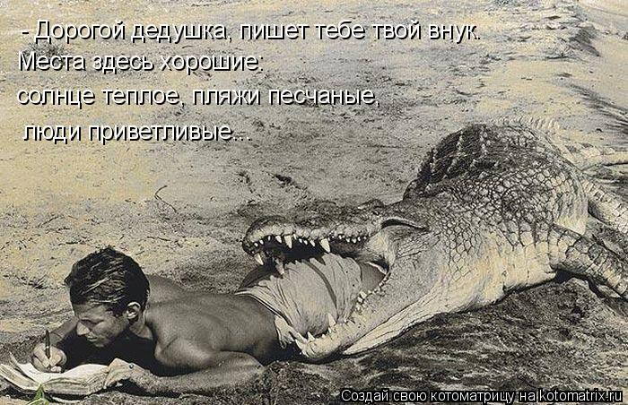 Котоматрица: - Дорогой дедушка, пишет тебе твой внук.  Места здесь хорошие: солнце теплое, пляжи песчаные,  люди приветливые...