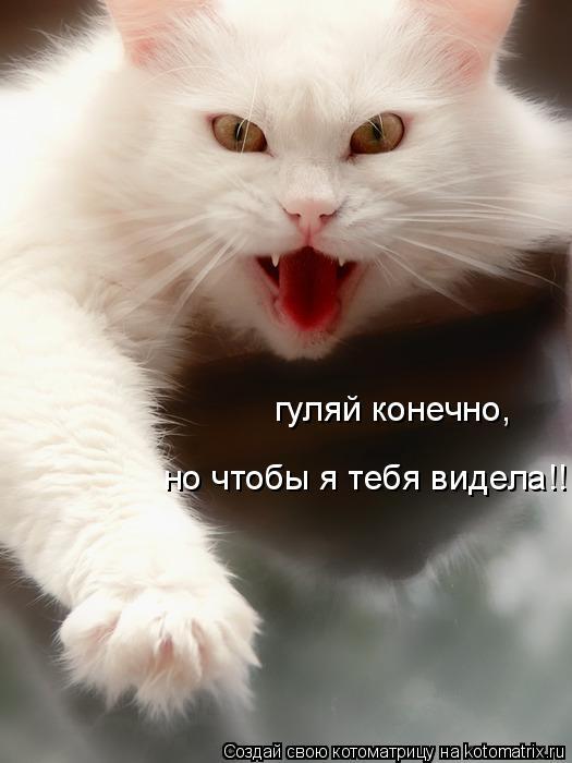 Котоматрица: гуляй конечно, но чтобы я тебя видела!!