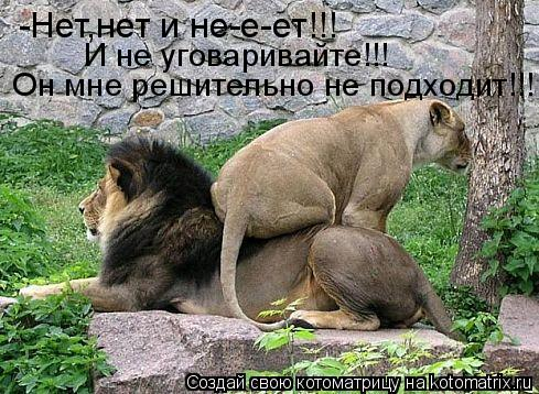 Котоматрица: -Нет,нет и не-е-ет!!! И не уговаривайте!!! Он мне решительно не подходит!!!